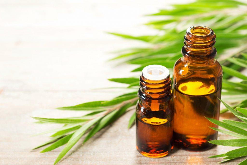 Hojas y aceite de Tea Tree