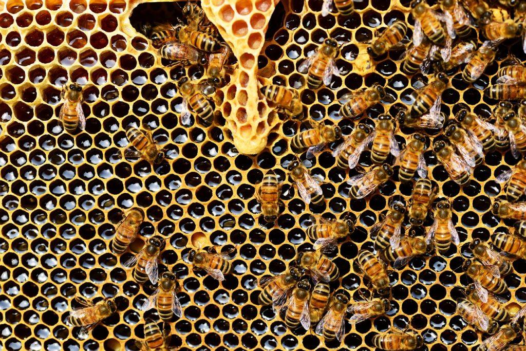 Abejas, cera y miel no vegano