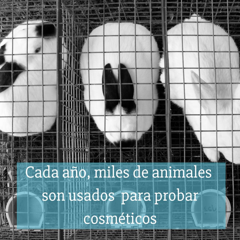 Cada año miles de animales mueres por pruebas de la industria de la belleza