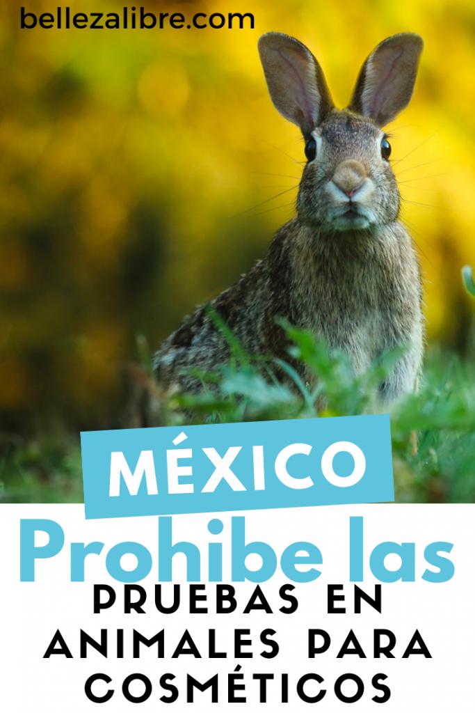 México prohíbe las pruebas en animales para cosméticos